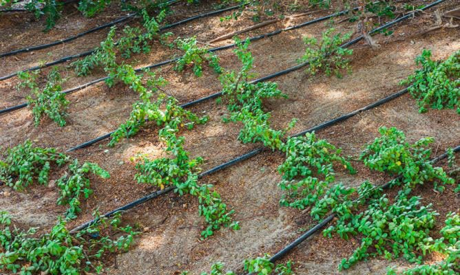 Types Automated irrigation systems