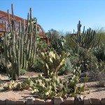 Дезърт Ботаникал Гардънс, Финикс, Аризона