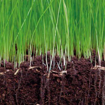 Посяване на семена