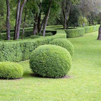 Засаждане на дървесна, храстова и цветна растителност