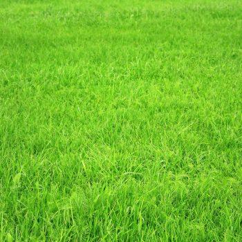 затревяване с тревна смес