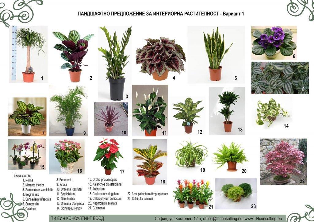 Ландшафтно проектиране интериорно озеленяване видове растителност