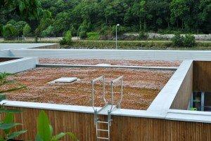 покривно озеленяване