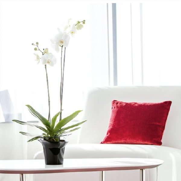 Адел кръгли кашпи за орхидеи