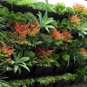 Растения за живи стени