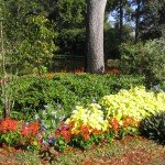 Как да поддържаме цветната градина през високите летни температури