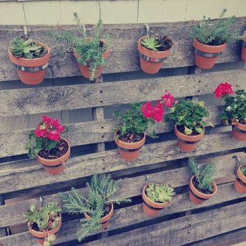 вертикална градина от билки