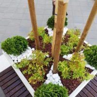 Озеленяване на дом и градина