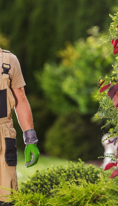 Happy and Satisfied Professional Caucasian Gardener with Scissors in His Hands. Gardening and Landscaping Theme.